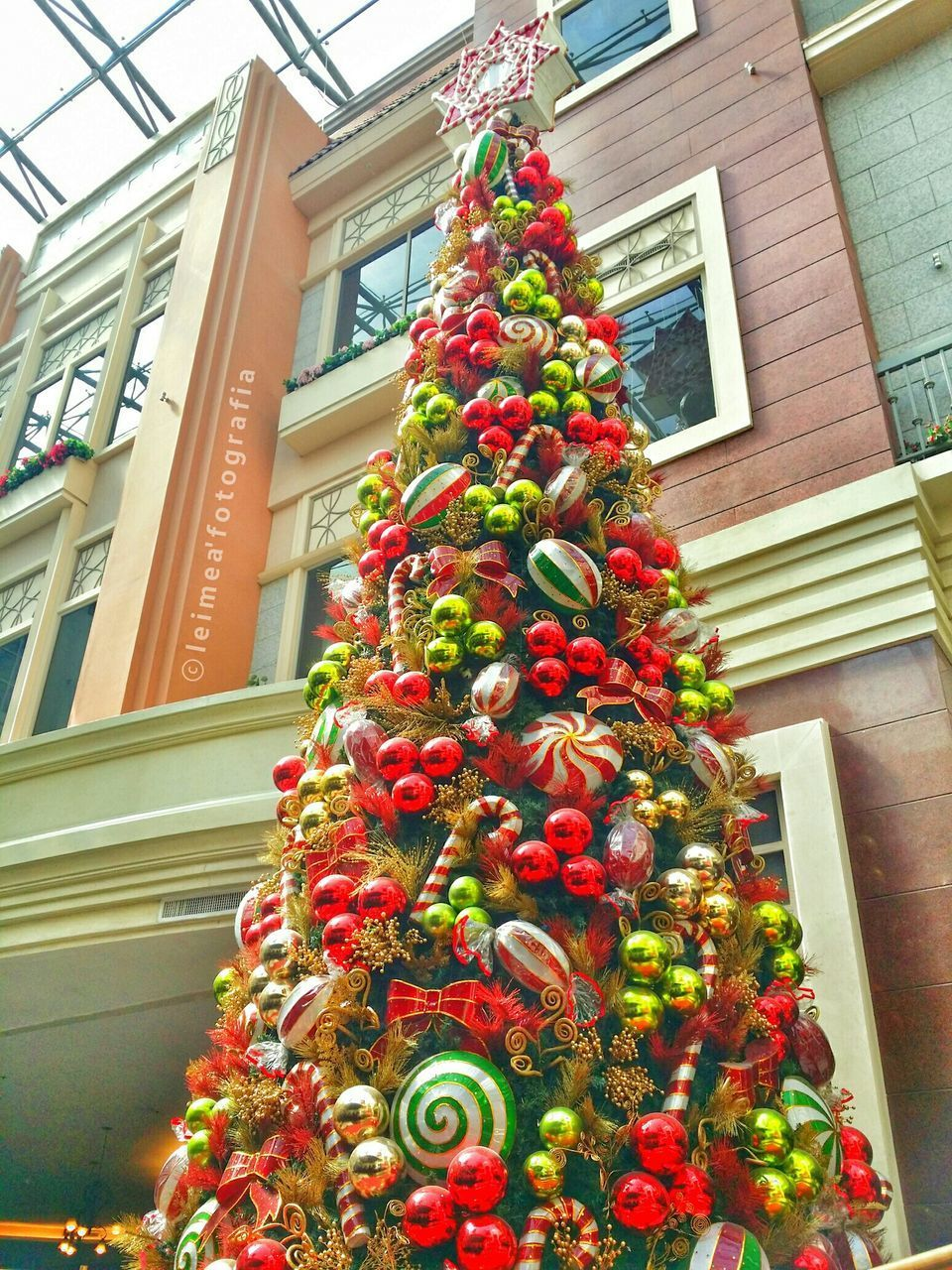 christmas, christmas tree, decoration, celebration, christmas decoration, low angle view, tradition, building exterior, window, architecture, built structure, holiday - event, house, celebration event, christmas ornament, hanging, no people, home interior, christmas lights, tree, day, multi colored, close-up