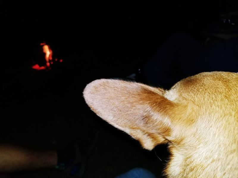 Relaxing by the fire Outdoors Bestfreinds Travel Oregon  Oregon Pets Dog Camp Fire Camping Trip Mapleton Oregon Whittaker Creek Relaxing Tranquility Doxiepin