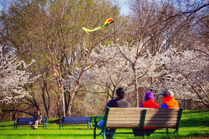 Kite watchers Let's Go Fly A Kite Kite Park Alexandria, VA Bench Sunny Day Colorful People Enjoying Life Relaxing