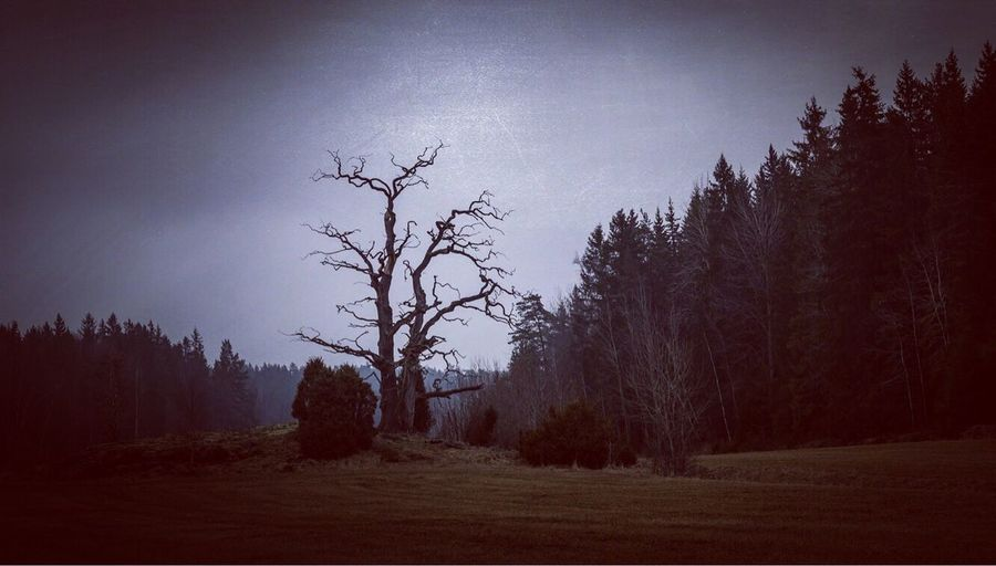 Spting Nature Tranquility Tree Landscape Bare Tree Outdoors Silhouette Day Sweden No People