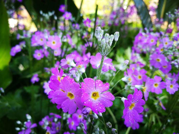 Chiang Mai | Thailand DoiAngKhang,Fang,ChiangMai Flawer🌸 Green Color Natereza Natural Beauty Nature Thailand Millennial Pink