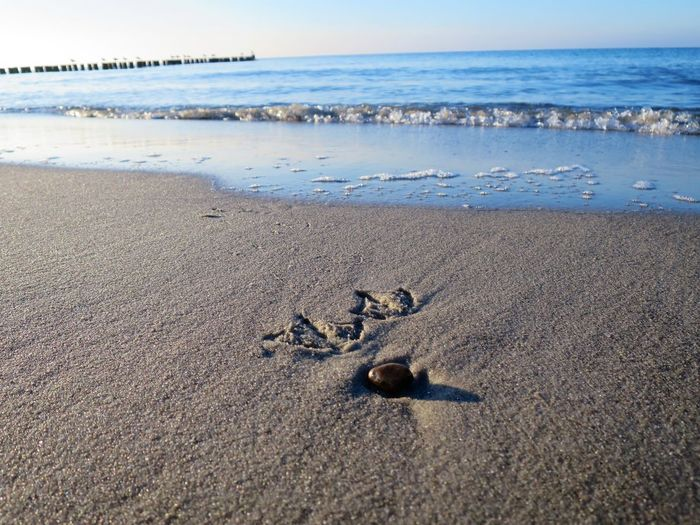Animal Animal Themes Beach Beauty In Nature Day Horizon Horizon Over Water Land Motion Nature No People Pebble Sand Scenics - Nature Sea Sky Tranquil Scene Tranquility Water Wave