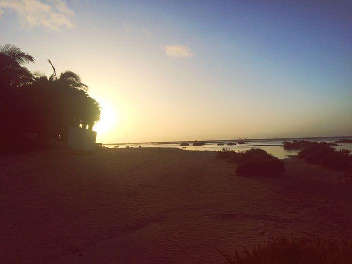 Sunrise Swim in Paradise Beach Paradise Capturing Freedom Sea Enjoying The Sun