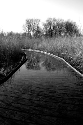 Wetland walk Canon Eos 350d Canon Photography Craplens Day East Sussex Field Grass Kitlens Lewes Nature Outdoors Plant Tranquil Scene Tranquility Wetlands Wooden