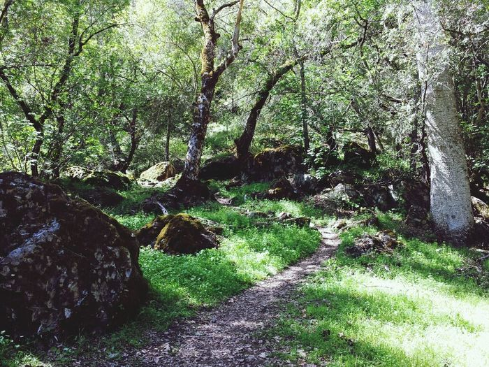 Just doing the nature thing :) Enjoying Life Just Having Fun EyeEm Nature Lover Chosen Paths