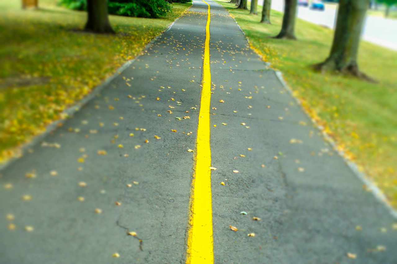 leaf, yellow, autumn, day, nature, the way forward, outdoors, road, park - man made space, no people, tree, close-up, grass