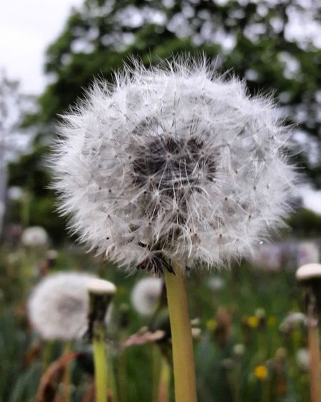 Flower Nature Beauty In Nature Outdoors Day Meinstadt GERMANY🇩🇪DEUTSCHERLAND@ Fotografieren Giessen Foto Blumen School Sonne Nature
