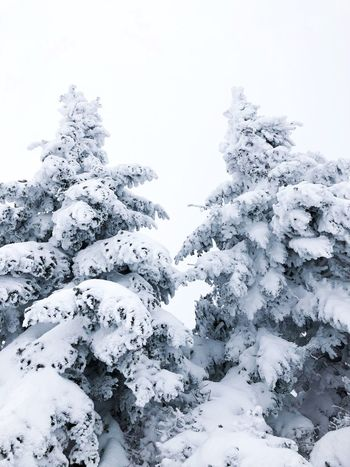 White giants Mont Tremblant, Qc Mont Tremblant February Wintertime Snow ❄ Snow Pine Tree Tremblant Montréal Quebec Cold Temperature Snow Winter Nature Beauty In Nature Tranquility No People Tranquil Scene Scenics Outdoors Freshness
