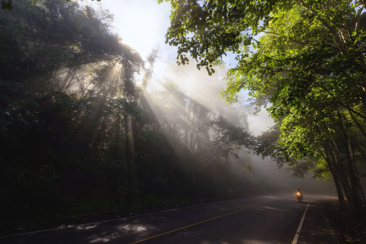 Silhouette motorbike riding on street with rays of light through tree forest