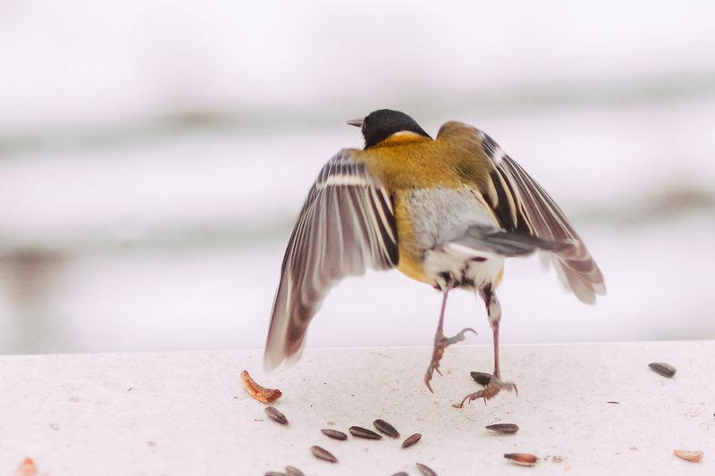 Close-up of bird perching on the beach