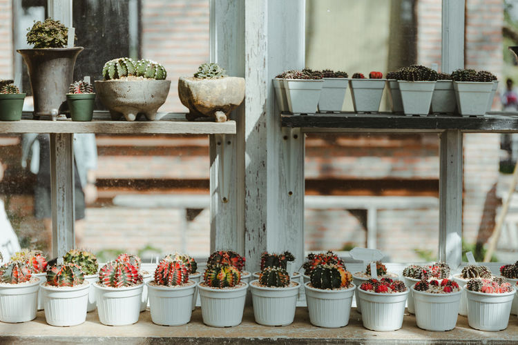 Potted plants on table