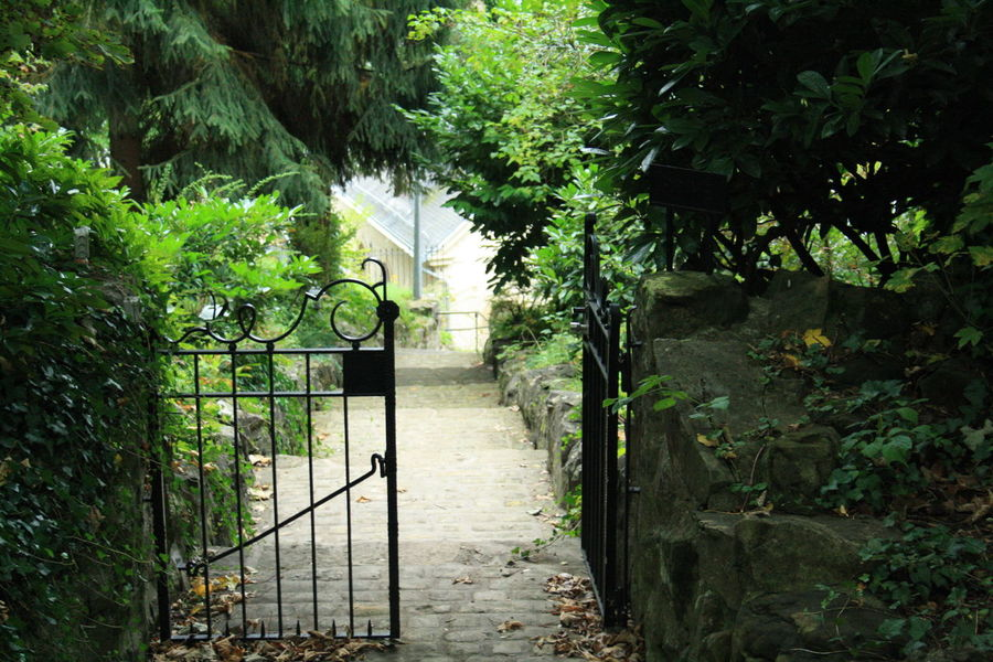 Beauty In Nature Day Green Color Growth Hidden Path Hidden Places Ivy Nature No People Outdoors Plant Tree