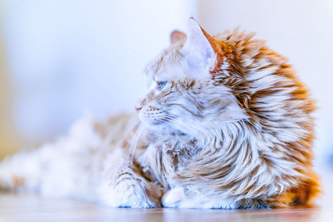 Kitty Pet Hospital Adopt Cat Animal Hair Animal Shelter Animal Themes Cat Close-up Day Domestic Animals Domestic Cat Feline Feline Portraits Indoors  Mammal No People One Animal Pet Care Pet Rescue Pets Sitting