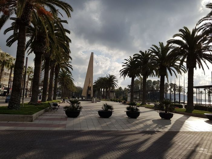 Palm trees on footpath against cloudy sky