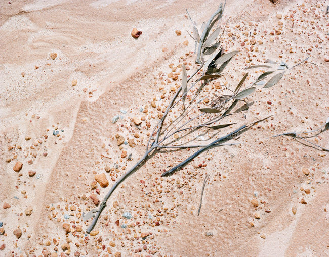 High angle view of dry plant on sand