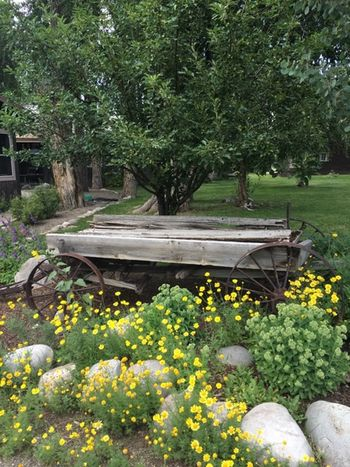 Garden Old Wagon Trees Flowers Flowers,Plants & Garden Flowers, Nature And Beauty