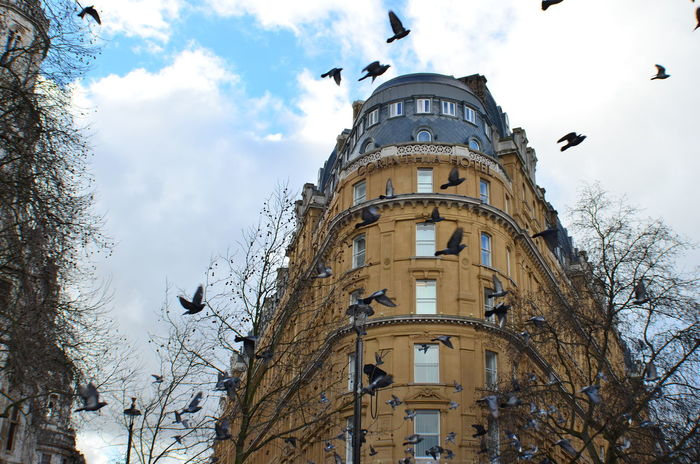 EyeEm LOST IN London Animal Themes Animal Wildlife Animals In The Wild Architecture Bare Tree Bird Building Exterior Built Structure Cloud - Sky Day Flock Of Birds Flying Low Angle View Mid-air Nature No People One Animal Outdoors Raven - Bird Seagull Sky Spread Wings Stork Tree Wildlife