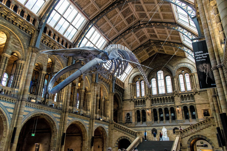 Bones Dinosaur Arch Architectural Column Architecture Building Building Exterior Built Structure Ceiling City Day Gothic Style History Low Angle View No People Ornate Outdoors Place Of Worship The Past Tourism Travel Travel Destinations Window
