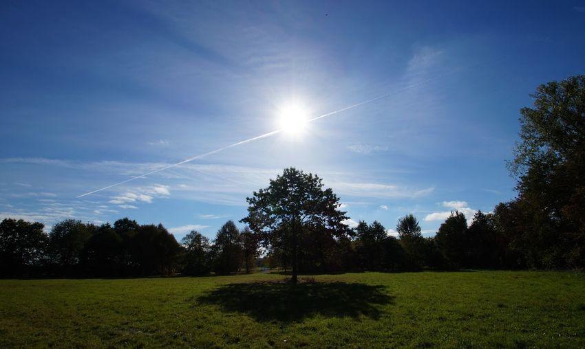 Telgte Baum Lichtung Sonne Wiese  Schatten Münsterland Fotografie