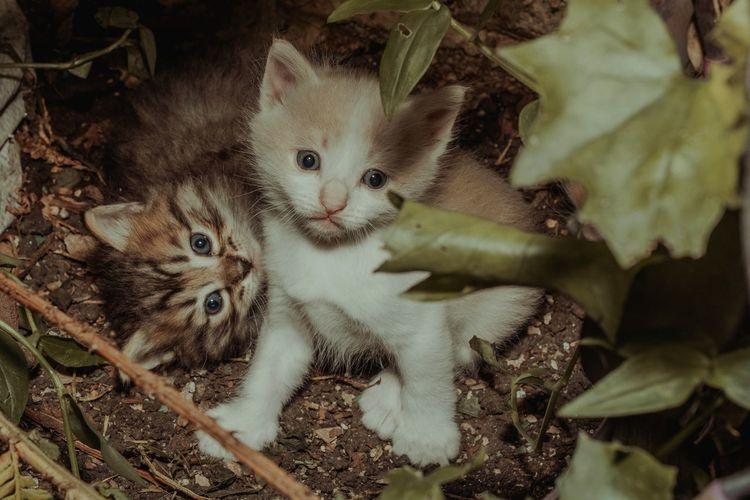Cat Baby Cat