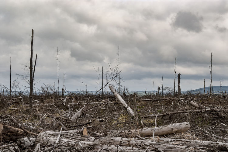 Remains of a forest Cloud - Sky Cloudy Cut Wood Cut Woods Dead Plant Dead Trees Deforestation Deforestation Effect Dried Plant Field Forest Photography Nature Remote