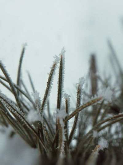 Snow Abstract StillLifePhotography Still Life Nature Photography Nature_collection Nature EyeEm Vision Eye4photography  EyeEm Gallery EyeEm Selects EyeEm Nature Lover Wintertime Winter Frozen Grass Grass Plant Growth Close-up No People Nature Beauty In Nature Tranquility Selective Focus Focus On Foreground Day Outdoors Cold Temperature Snow Frozen Winter