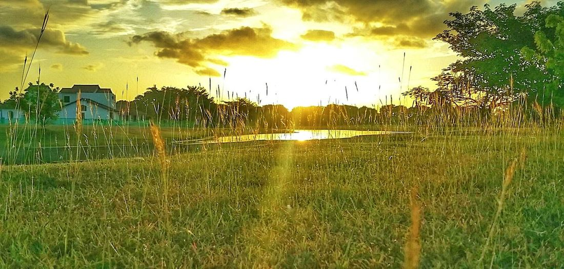 Tropical Paradise El Chirú Provincia Cocle Holiday Memories Holiday Trip Sunset Silhouettes Sunsetlover Sunsetporn Sunset And Clouds  Sunset Sunset_universe Nature_collection Eye4photography  Light And Shadow Golden Hour EyeEm Best Shots Pictureoftheday