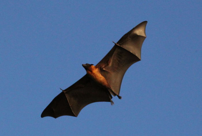 100mm Blue Clear Sky Day Directly Below Flying Flying Fox Maldives Nature No People Open Wings Paradise Island Sunny