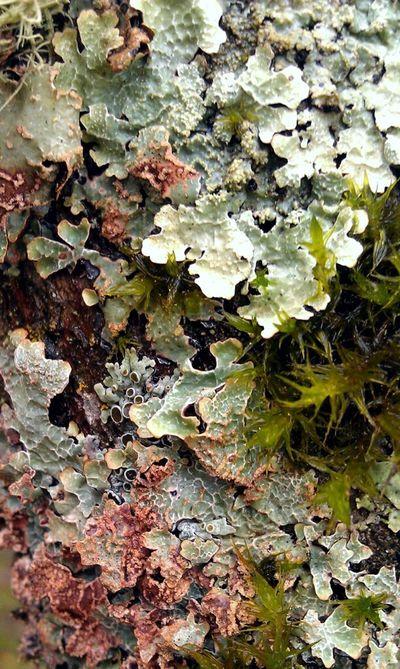 Nature Macro Textures Macro Week Texture Macro Nature
