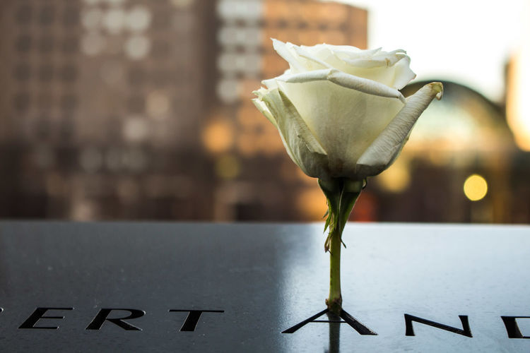 Close-up of rose at national september 11 memorial and museum