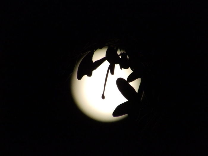"""feeling """"Artsy"""" in June, learning my way around a new camera Circular Full Moon Moon Moon Silouette Moonlit Natural Black And White Round Silouette Photography"""
