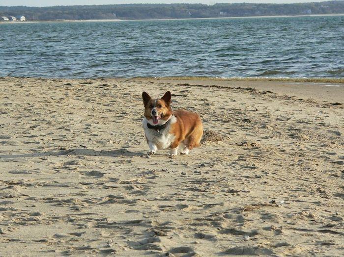 Dog on beach against sea