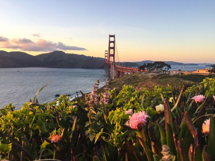 Flowers Growing By Golden Gate Bridge Against Sky During Sunset