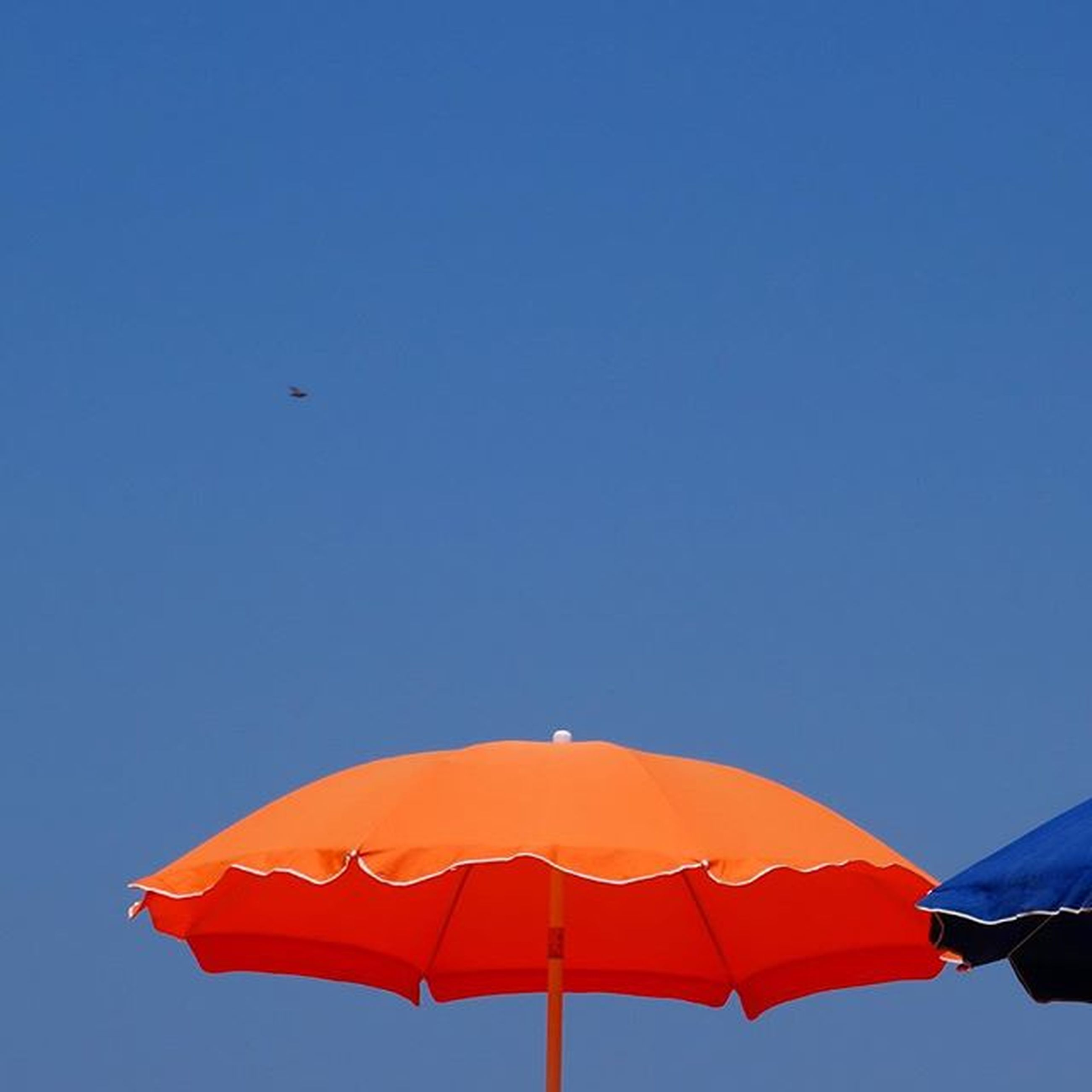 clear sky, low angle view, copy space, blue, flying, red, mid-air, multi colored, outdoors, flag, day, no people, sky, patriotism, bird, identity, freedom, wind, sunshade, orange color