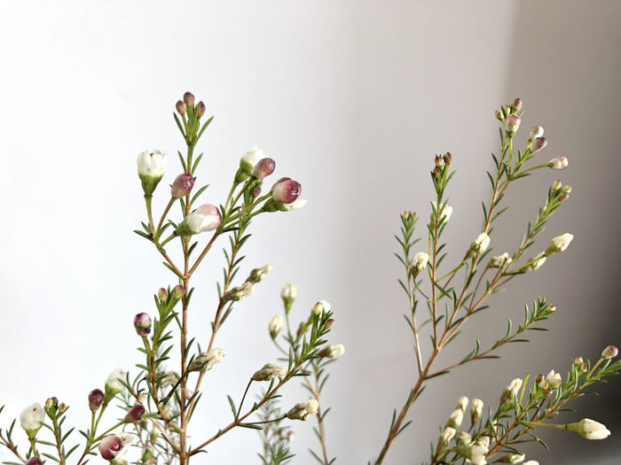 Plant Flower Growth Beauty In Nature Close-up Nature Freshness Day White Color Flower Head Focus On Foreground Fragility Flowering Plant Still Life Life Winter Blooming Spring Springtime Green Color Naturelovers Bud No People Indoors  Petal