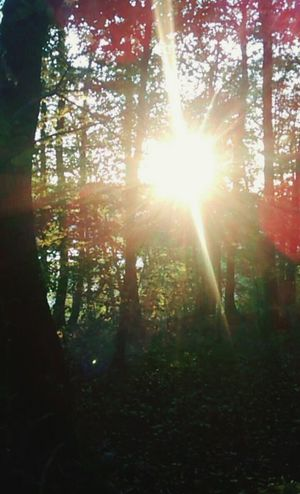 Sunrise Forest Landscape Hello World