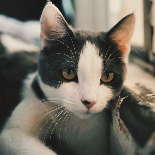 cat I'm kitty