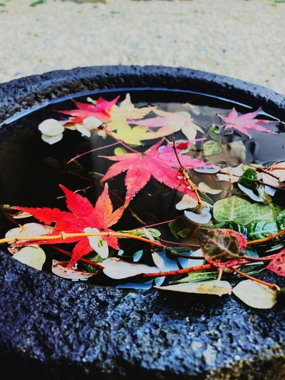 Leaf Plant Part Water Nature Autumn Plant Day Leaves Close-up Floating On Water No People Maple Leaf