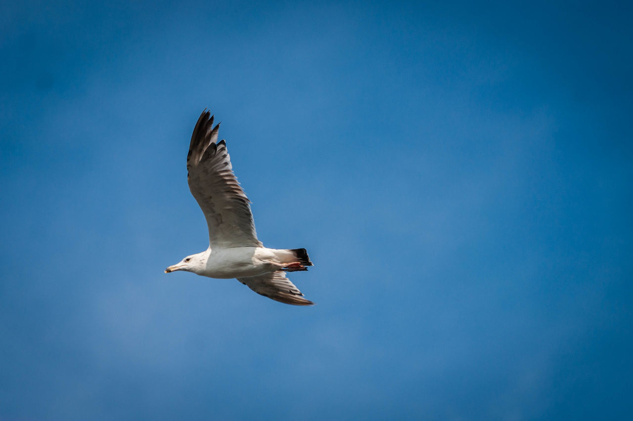 Bird against blue sky