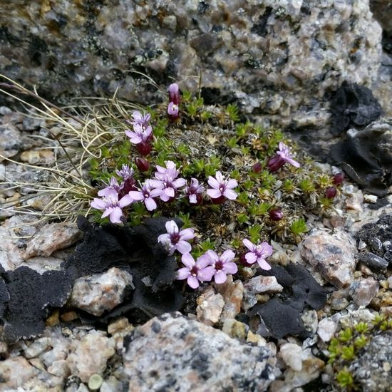 Small and very Beautiful Flowers grow on the Stones At The Edge Of The World in Russian Teriberka Териберка • Beautiful Nature Nature EyeEm Nature Lover Macro_flower Flowerporn http://mixyourworld.com/2015/05/30/teriberka-far-north-of-russia/ http://mixyourworld.com/2015/05/23/teriberka-leviathan/