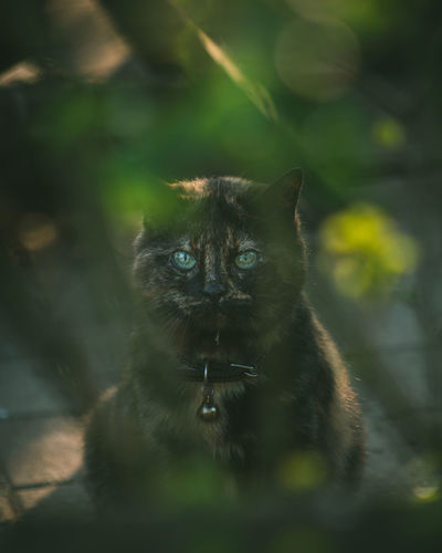 Portrait of cat on leaf