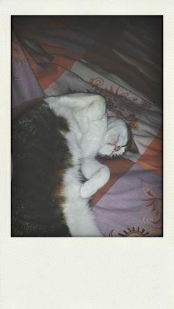 Ouai. Moi dans mon lit j'ai un chat qui prend le trois-quart de la place.. ?? Bonne nuit a tout les chatons ? Relaxing Cat Cute Enjoying Life