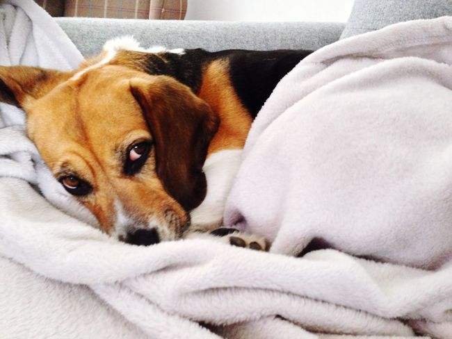 I Love My Dog Beagle Hugoboss Sunday