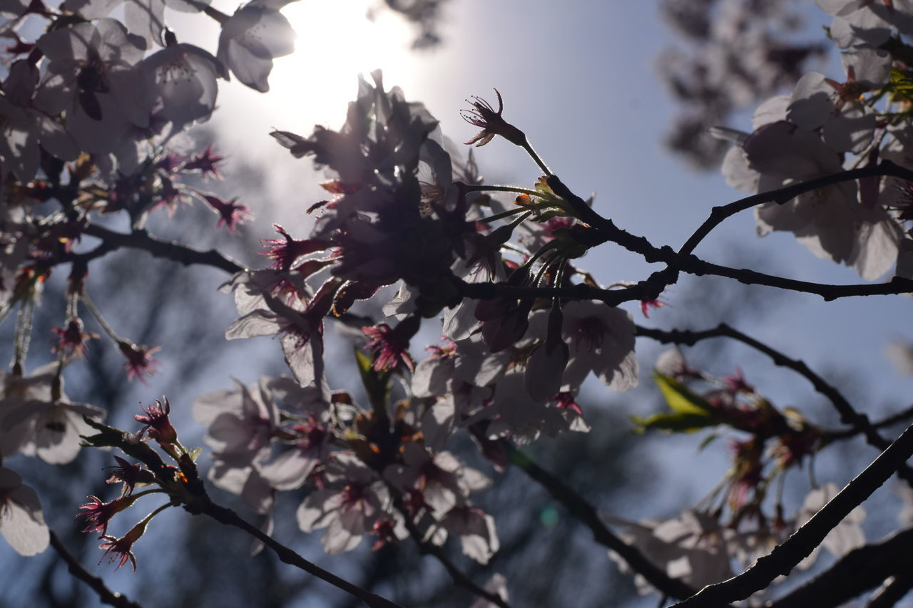 tree, flower, branch, fragility, growth, nature, blossom, beauty in nature, springtime, freshness, no people, twig, day, outdoors, low angle view, close-up, blooming, flower head, sky