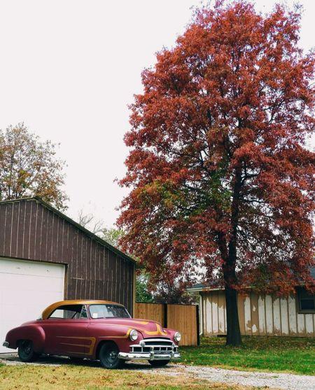 Classic Foliage