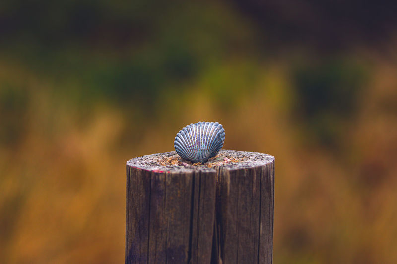 Close-up of shell on wooden post
