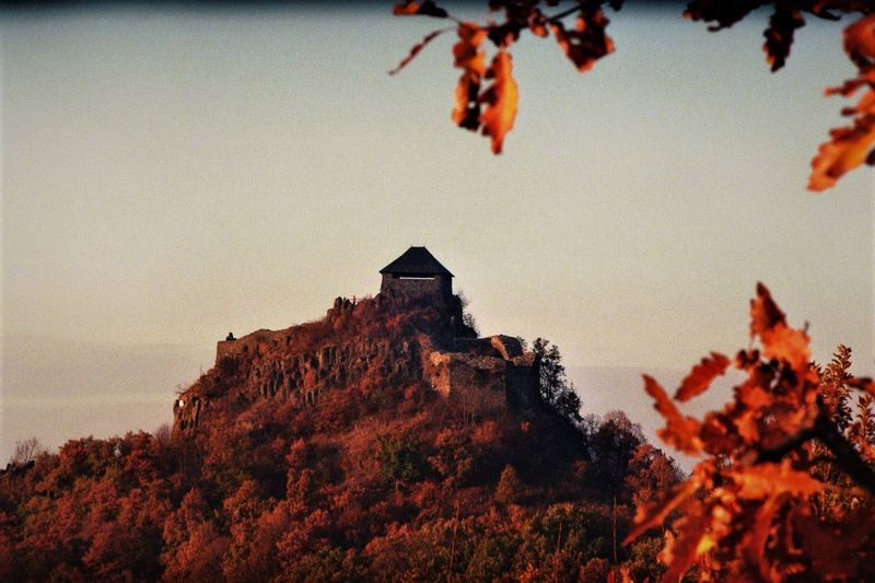 Castle of Salgó Analogue Photography Castle Exa Hungary Architecture Beauty In Nature Building Exterior Built Structure Clear Sky Day Film Photography Filmisnotdead Low Angle View Nature No People Outdoors Sky Tree