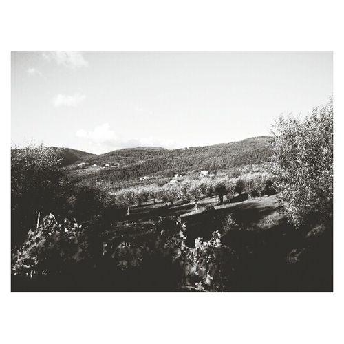 Tuscany First Eyeem Photo