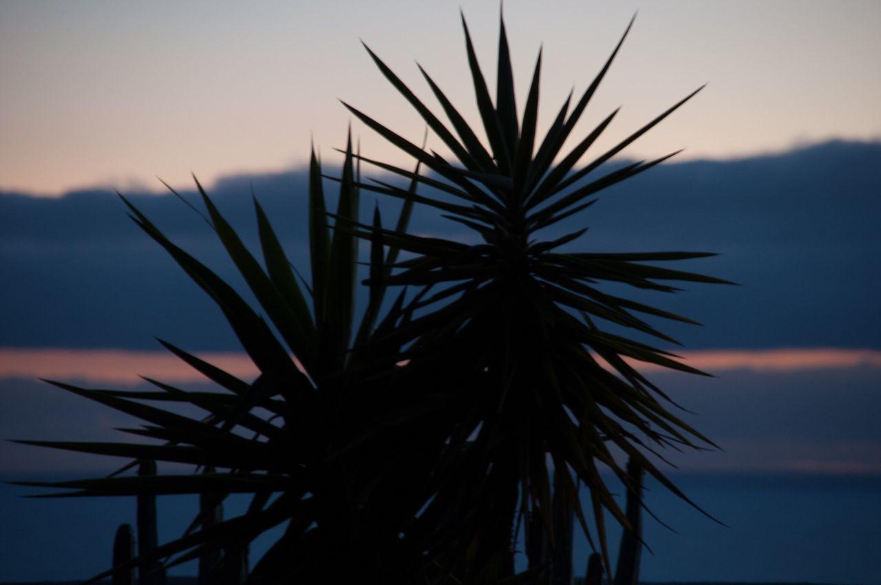 Silhouette Plant Against Sky