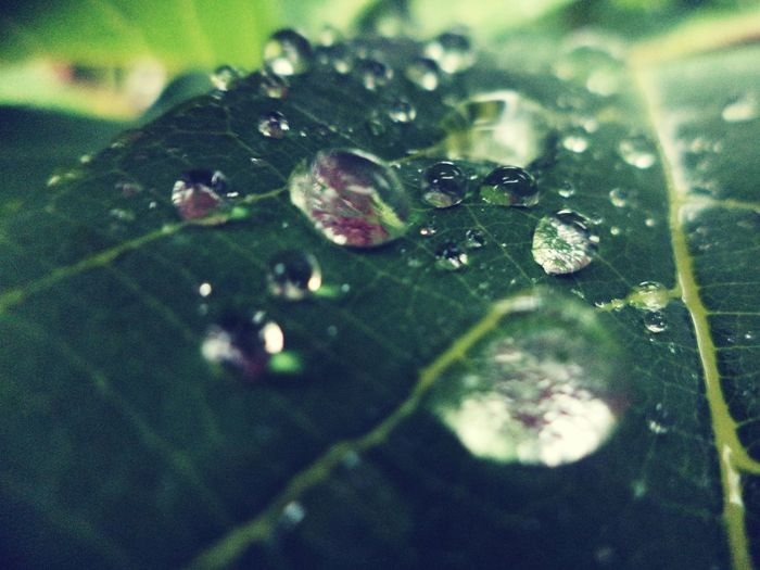 Naturelover Brotherphotography Rainy Days Raindrops Green Leaves